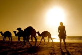 A student with camels on the beach